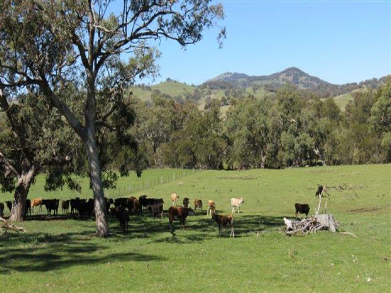 """Lot 802 """"Arramlu"""" Borambil Creek Rd, Willow Tree, Willow Tree, NSW 2339"""