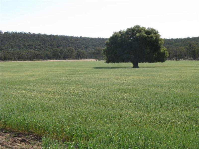 'Pine Range', Beckom, NSW 2665