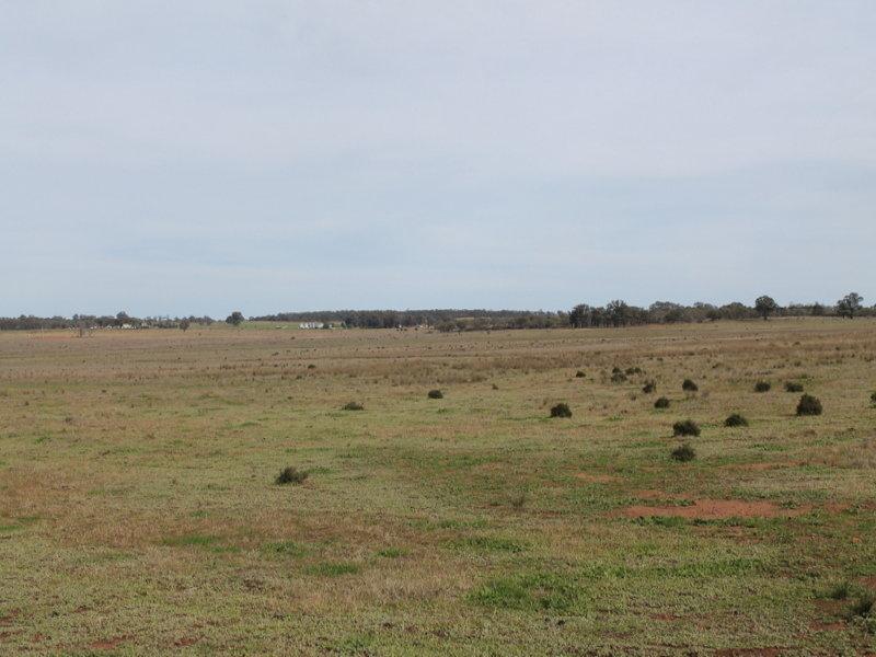 - 'Rosebank', West Wyalong, NSW 2671