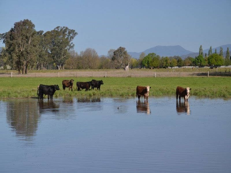 KANUNGRA DOCKER - GRETA WEST ROAD, Docker, Vic 3678