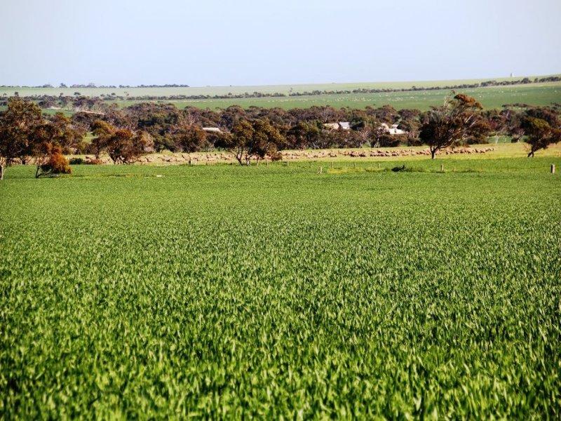 173 Didlyamulka road, Koolywurtie, SA 5575