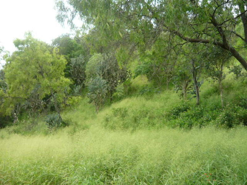 Address available on request, Lefthand Branch, Qld 4343