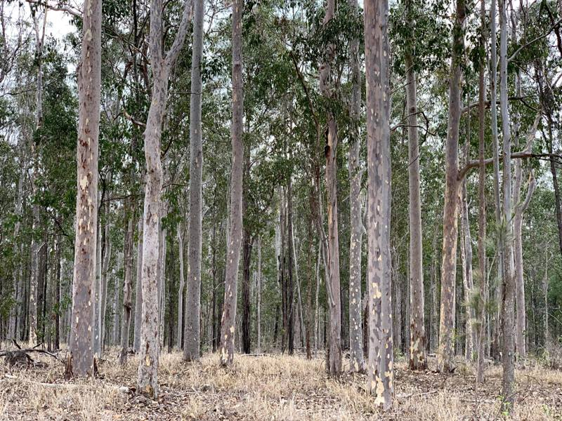 Lot 8, Pacific Highway, Glenugie, NSW 2460