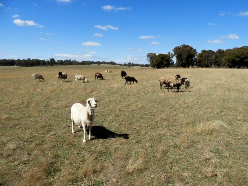 Lot 32 Boongarra Road, Laggan, NSW 2583
