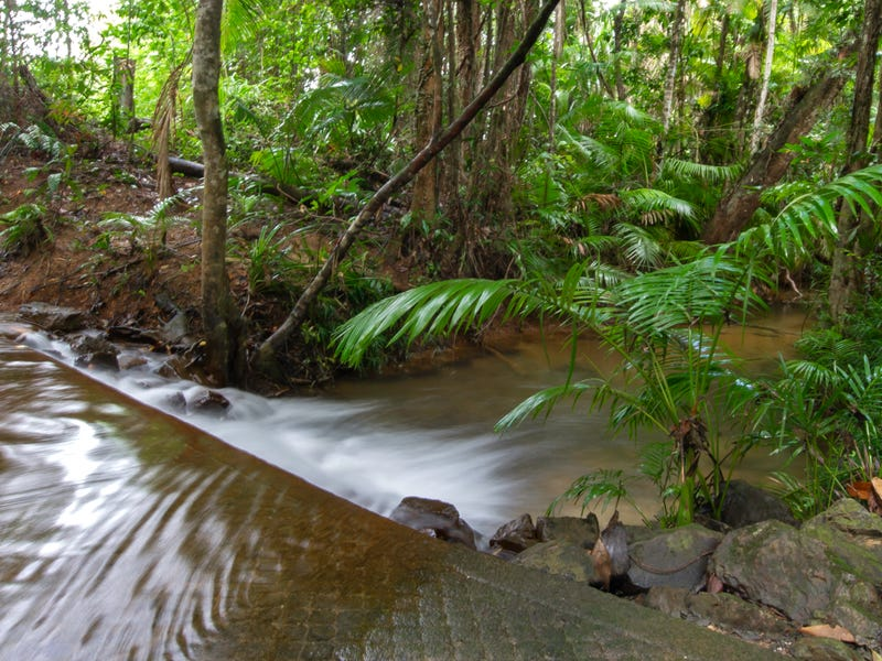 197 Forest Creek Road (Daintree), Forest Creek, Qld 4873