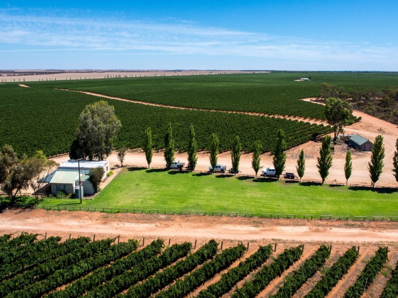 New Residence Vineyard, Loxton, SA 5333