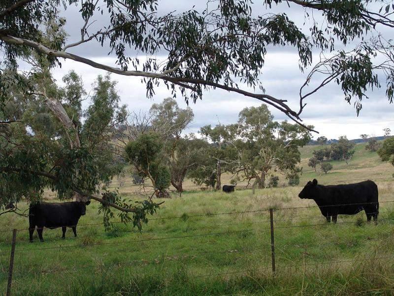 RMB 109 Springvale Rd, Nangus, NSW 2722