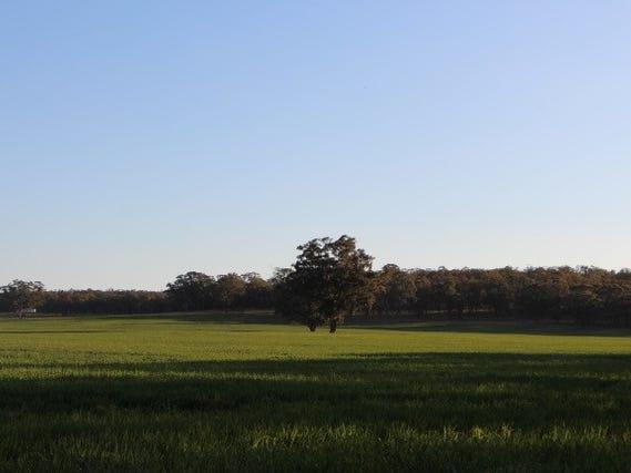 1131 Golden Highway, Dunedoo, NSW 2844