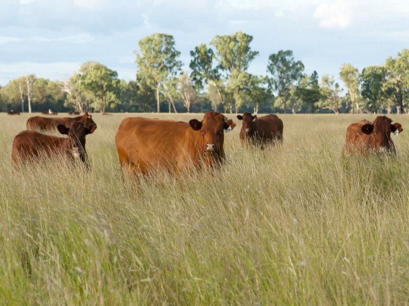 """"""" Irragappa, Bellata, NSW 2397"""