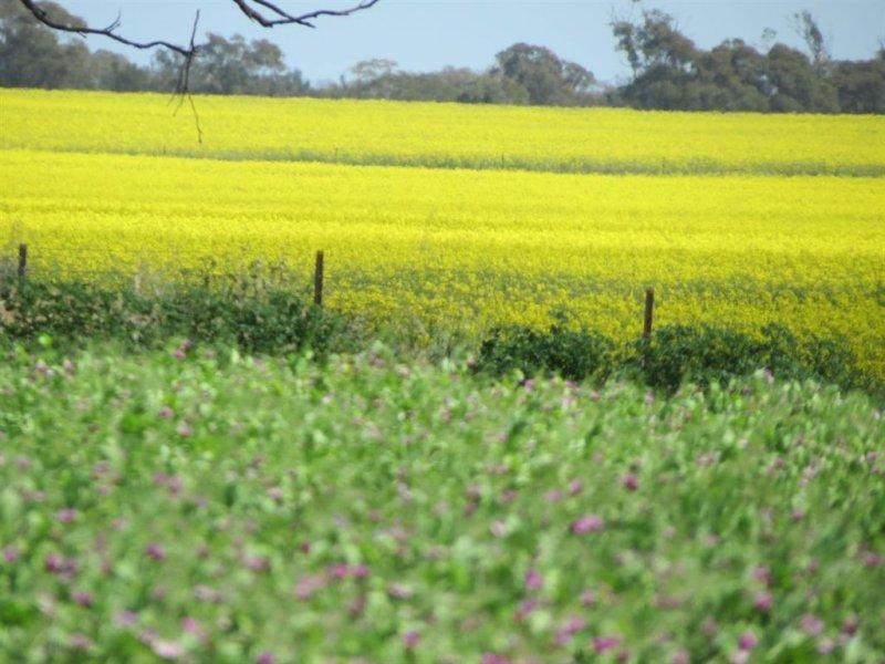 . Murillo, Tallimba, NSW 2669