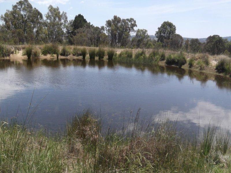 485 Rimbanda Road, Woolbrook, NSW 2354