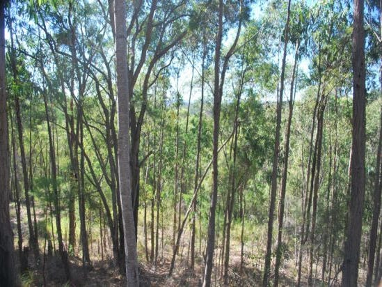 216 Mt. Simpson Track, Bucketty, NSW 2250