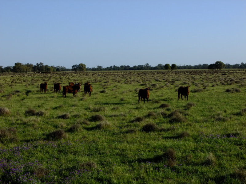 . 'Walla Walla', Gulargambone, NSW 2828