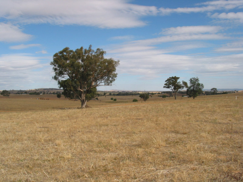 HIGHGROVE  ESTATE, Cowra, NSW 2794