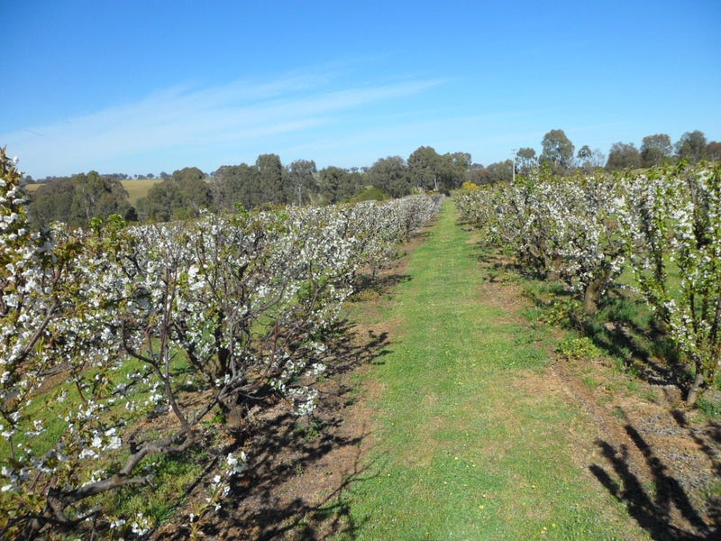 650 Monteagle Stock Route East Road, Young, NSW 2594