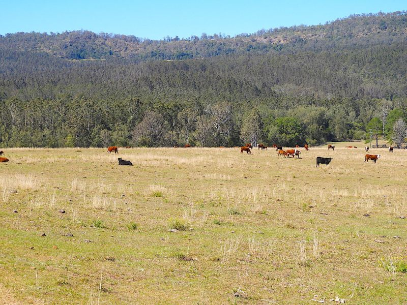 408 Farm Road, Bonalbo, NSW 2469