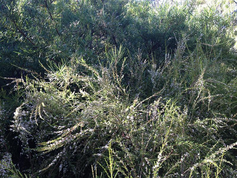 Lot 5, Kangaroo Pde, Yallingup, WA 6282