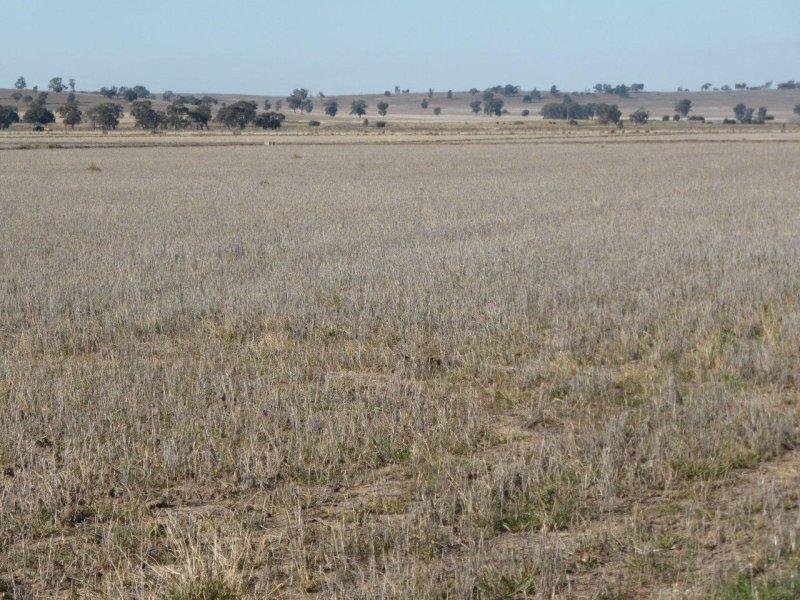 'MIDGEE' LEETON-NARRANDERA ROAD, Narrandera, NSW 2700