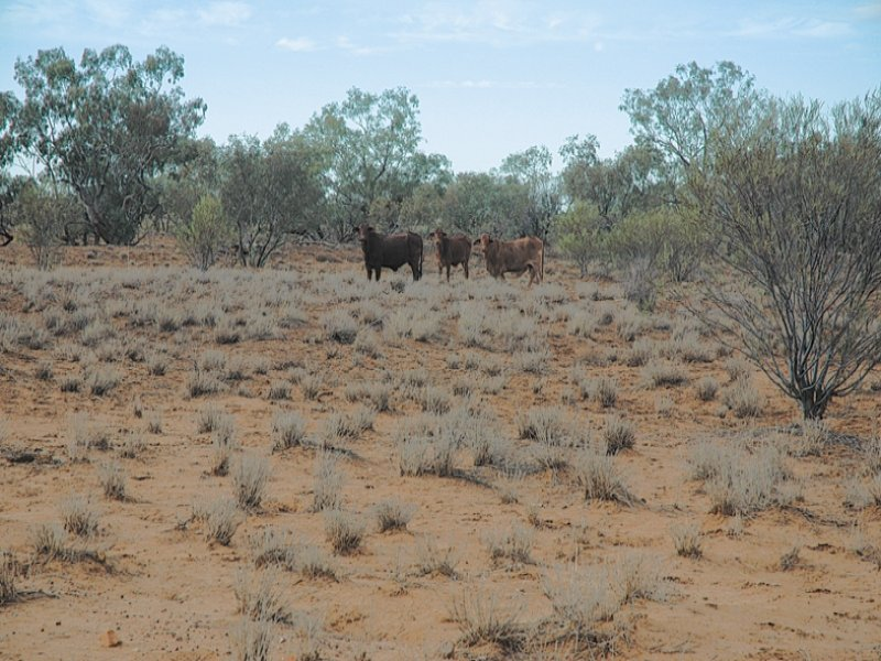Address available on request, Boulia, Qld 4829