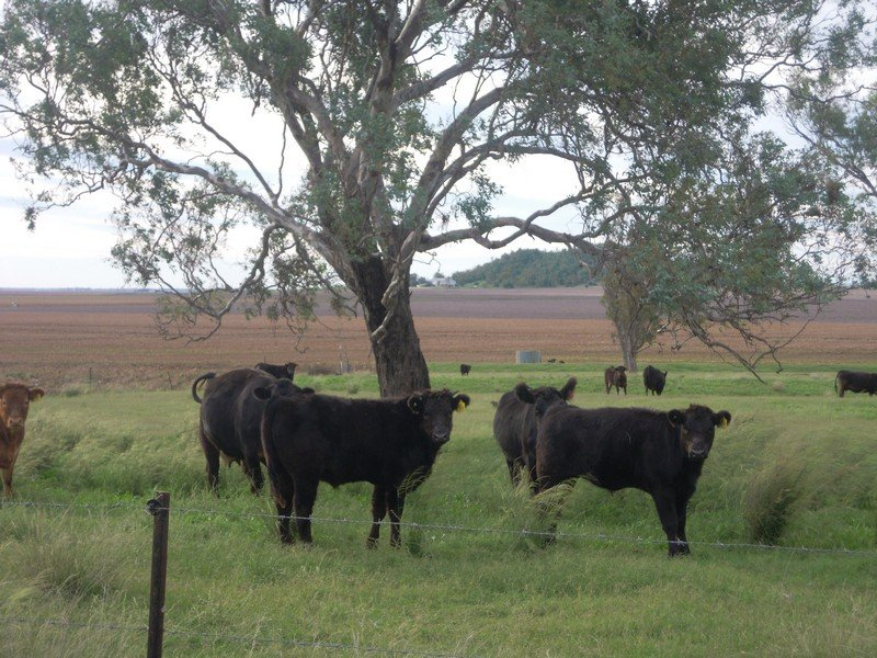 Lot 46 Toowoomba Cecil Plains Road, Mount Tyson, Qld 4356