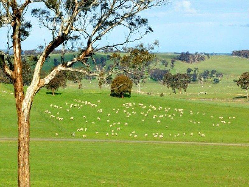 479 Cuddyong Road, Binda, NSW 2583