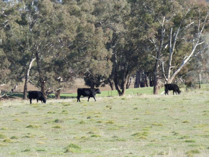 720 Back Brawlin Road, Cootamundra, NSW 2590