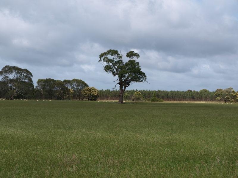 121 Condah-Hotspur Upper Road, Condah, Vic 3303
