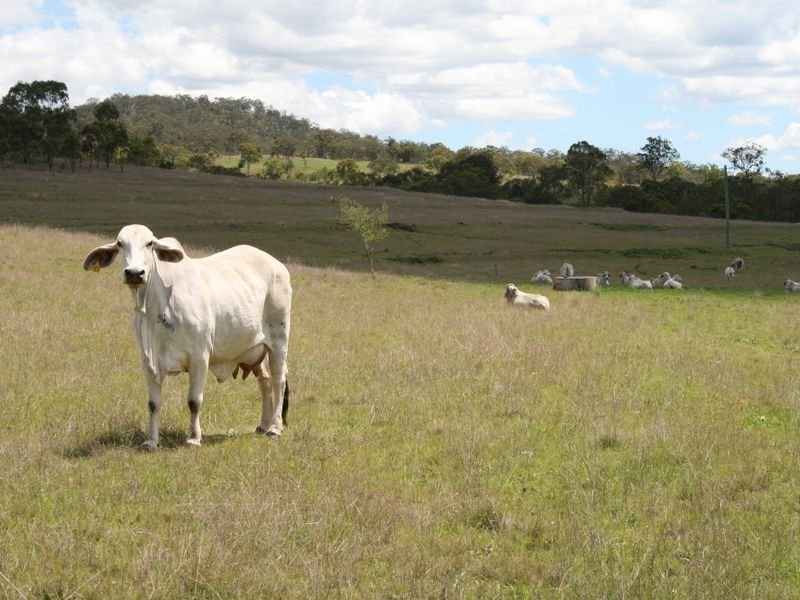Lot 1 Cunningham Highway, Maryvale, Qld 4370