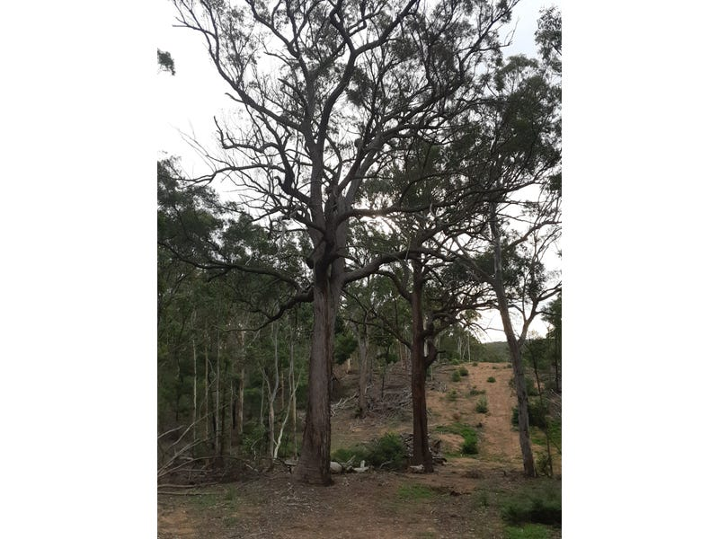 Lot 12 Timberlight Road, Windellama, NSW 2580