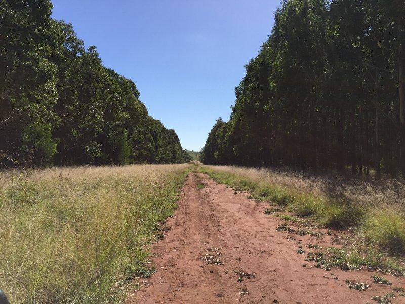 Haly Creek Road, Goodger, Qld 4610
