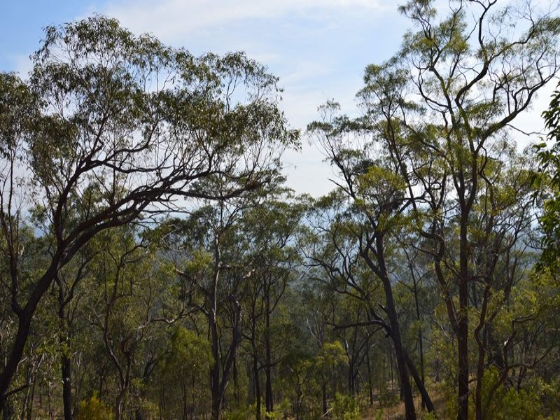 Lot 119, Commission Road, Howes Valley, NSW 2330