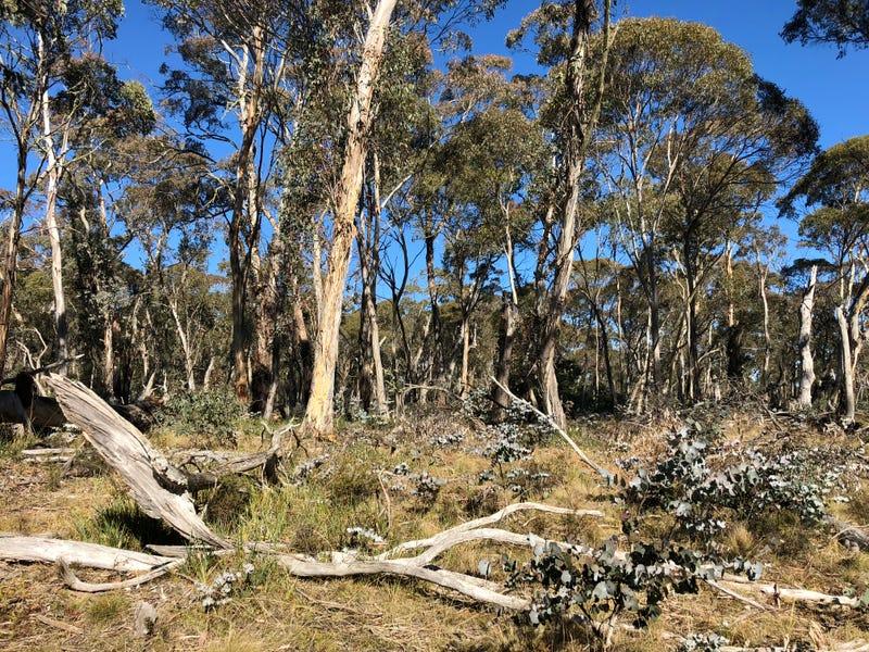 Lot 1/826487 Elliott Way, Nurenmerenmong, NSW 2649