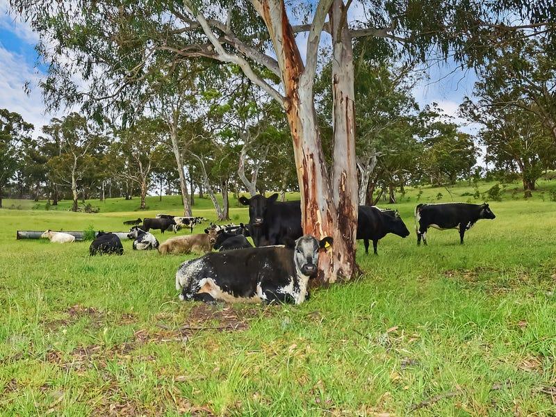 157 Blackmans Creek Road, Hartley, NSW 2790