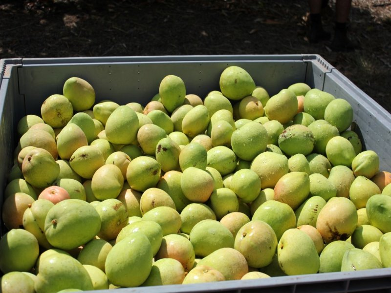 Jabiru Tropical Orchards, 335 Hopewell Road, Berry Springs, NT 0838