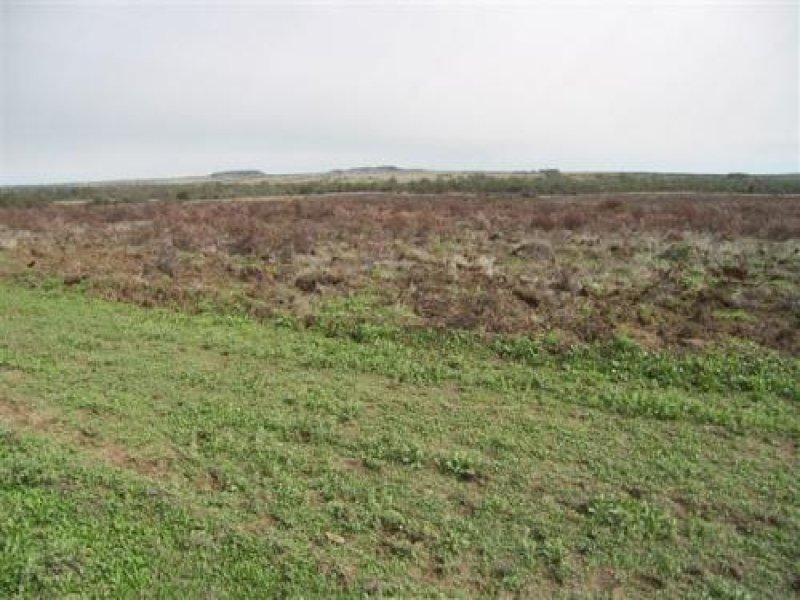 Kewpie, Wallumbilla, Qld 4455