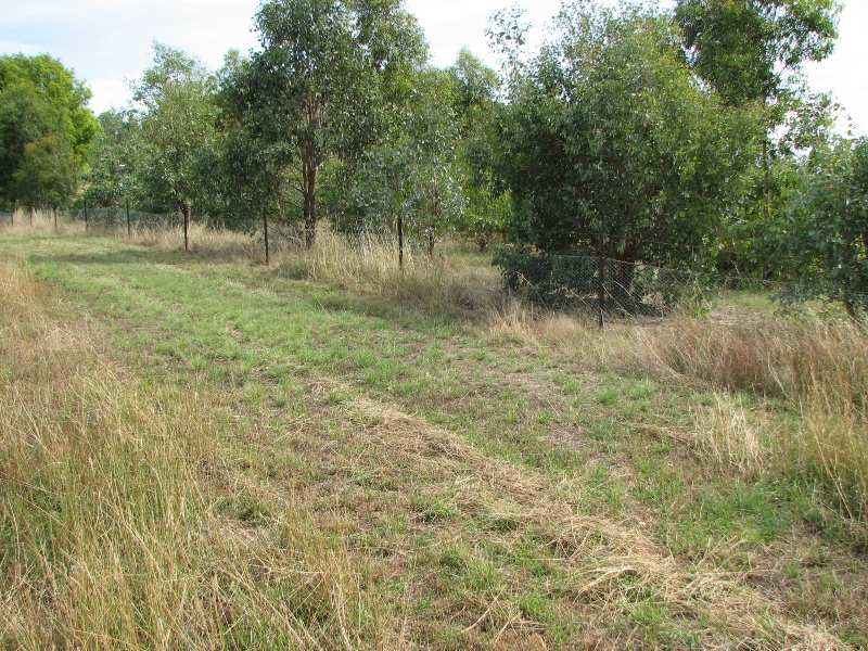 Lot 1 Peter Whitty Road, Darbys Falls, NSW 2793