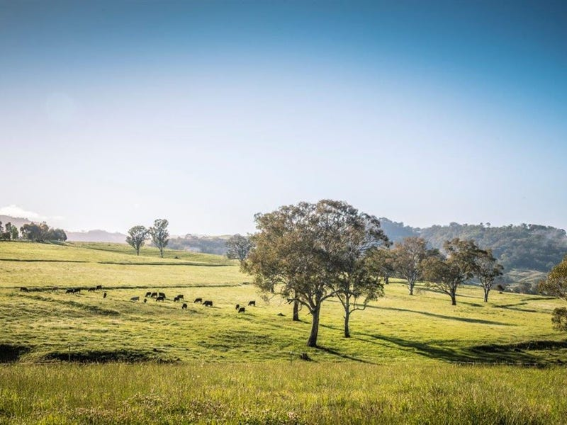 . 'Lincoln Farm' Timor Rd, Blandford, NSW 2338