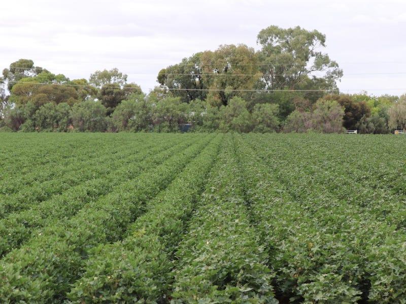 Citrus Grove Lachlan Valley Way, Hillston, NSW 2675