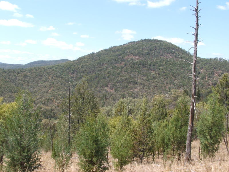 Lot 8 Rocky Creek Road, Bonshaw, NSW 2361