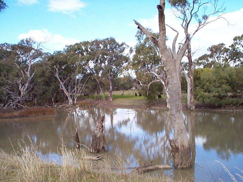 6 Echidna Way, Conargo, NSW 2710