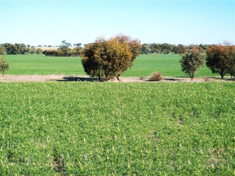 Address available on request, Cunderdin, WA 6407