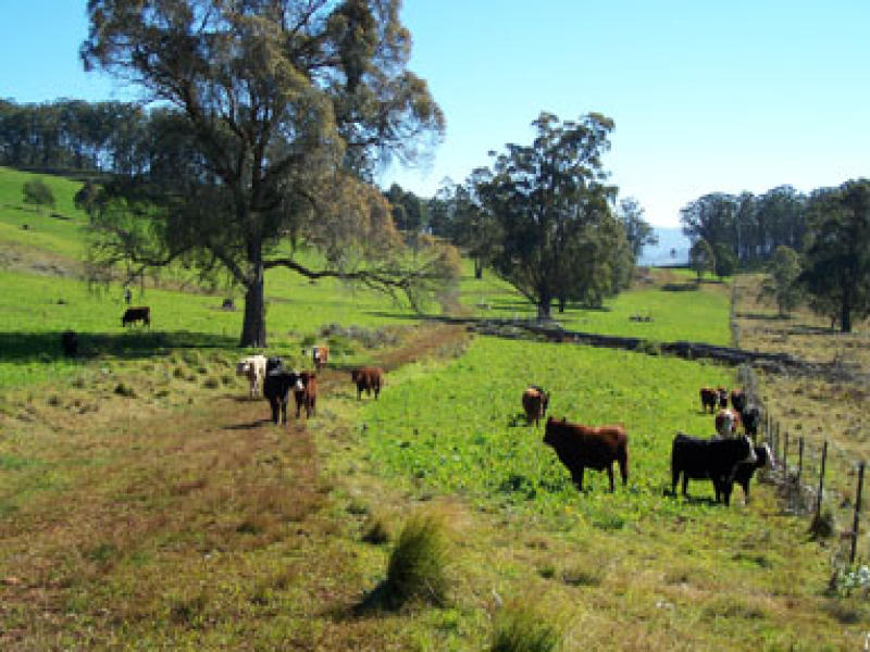 The Ranch, Nowendoc, NSW 2345