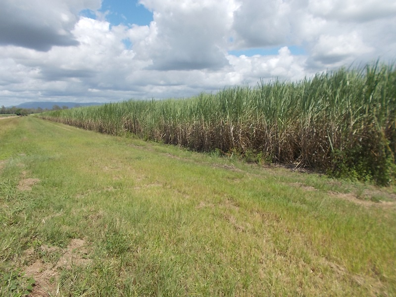 1, Lot 1 Scotts Road, Long Pocket, Qld 4850