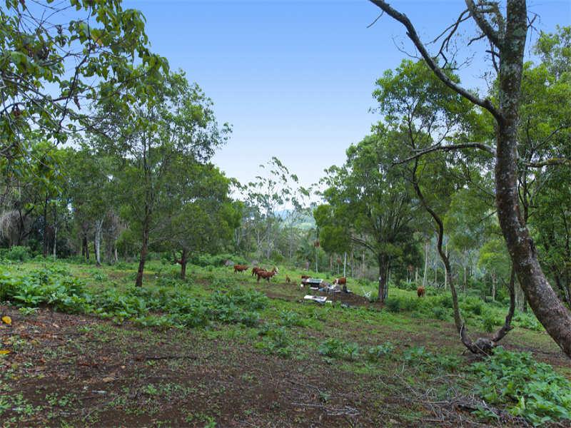 Garden Of Eden Road, Currumbin Valley, Qld 4223