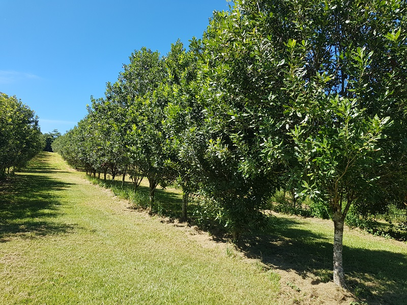 475 Pearces Creek Road, Alstonville, NSW 2477