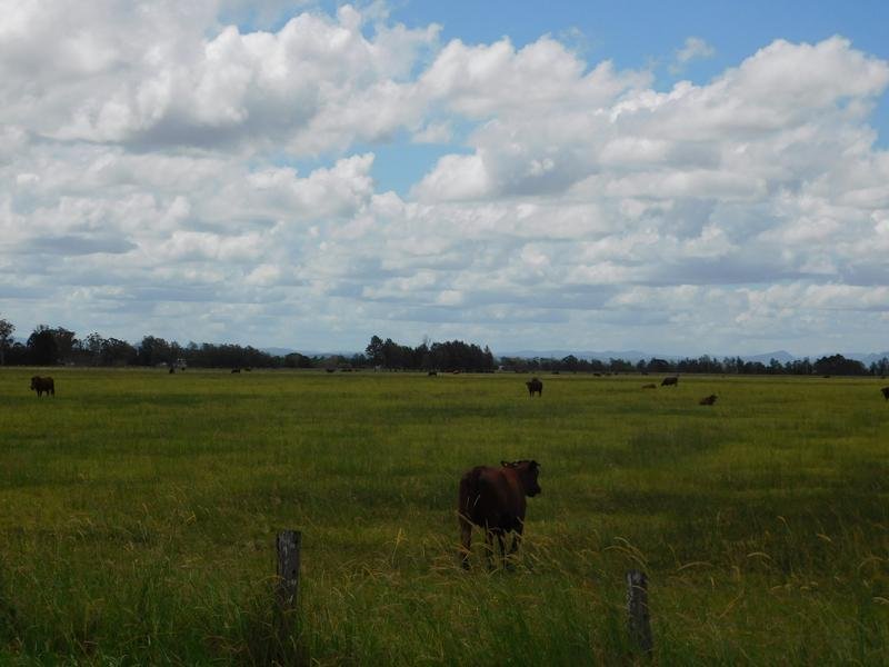 430 Sextonville Road, Dobies Bight, NSW 2470