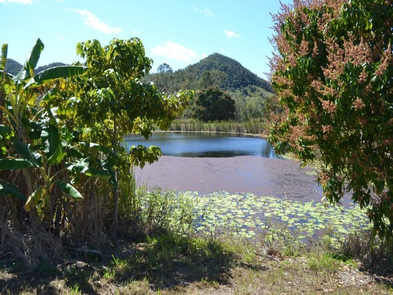 14 Said Road, Seaforth, Qld 4741