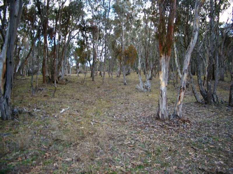 Lot 231 Wollun Road, Walcha, NSW 2354