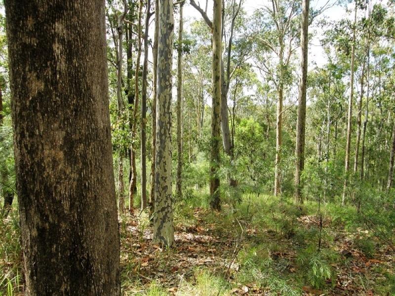 2541 Gwydir Highway, Ramornie, NSW 2460