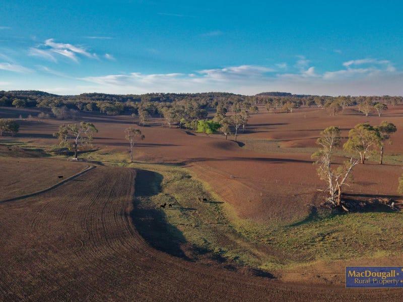 1098 Puddledock Road, Armidale, NSW 2350